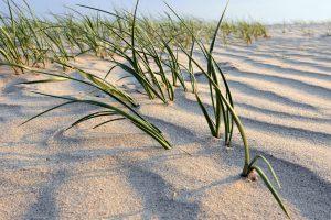 Sand Strand Gras Algen AP1100776